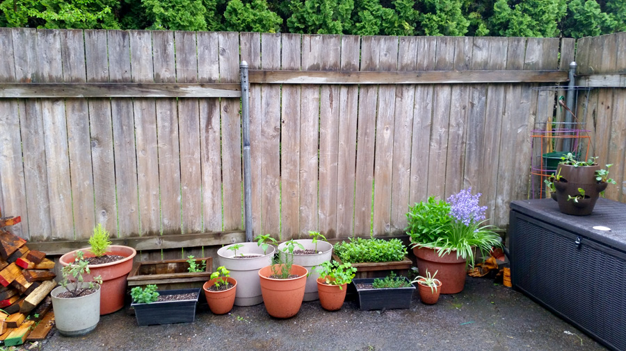 2016's very tiny container garden